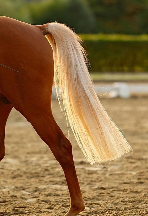 Уход за гривой и хвостом лошади: разбираем вопрос