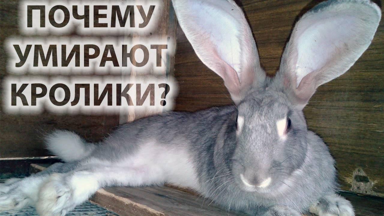 Умирают кролики: что делать, если декоративные или домашние маленькие кролики внезапно умерли зимой один за другим и причины этого