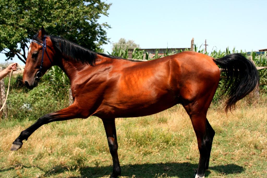 Масти лошадей с фотографиями, названиями и описанием