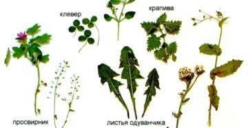 Удобрение из крапивы: способы приготовления, для каких растений применять