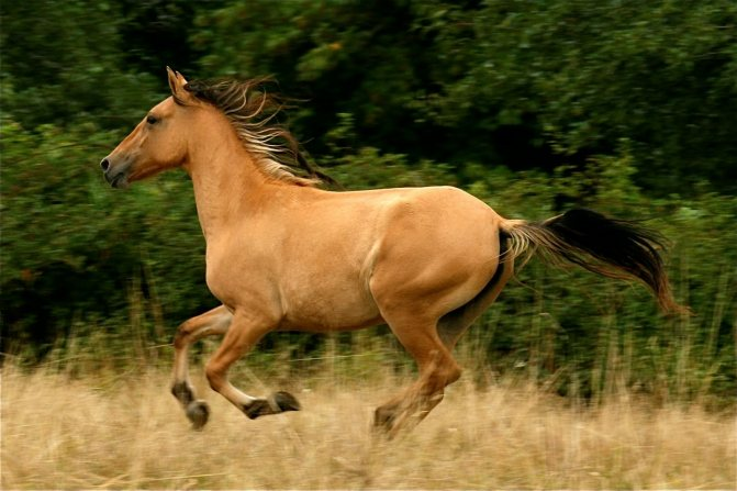 Мустанги – дикие лошади америки 2020