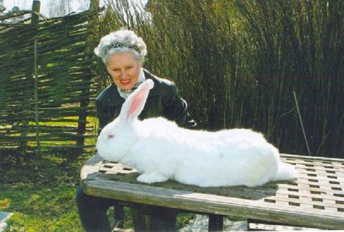 Какой породы самый большой кролик в мире