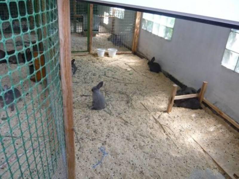 Содержание кроликов в вольерах