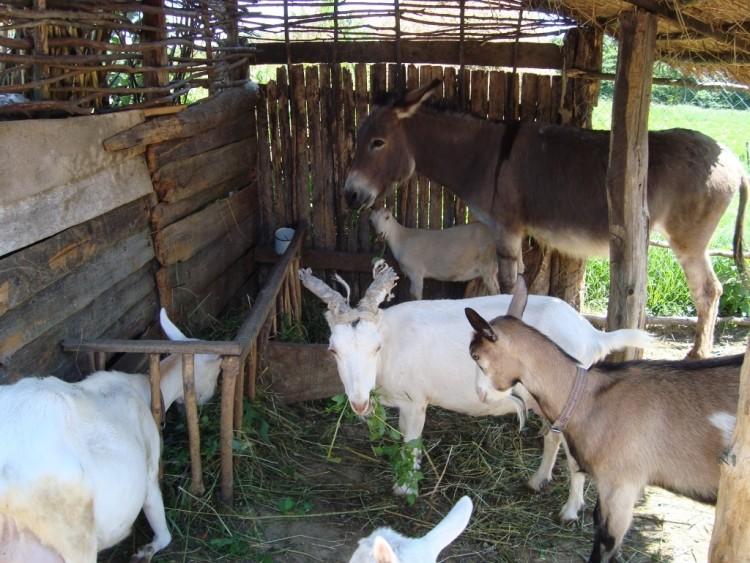 Уход и содержание коз в домашних условиях для начинающих 2020