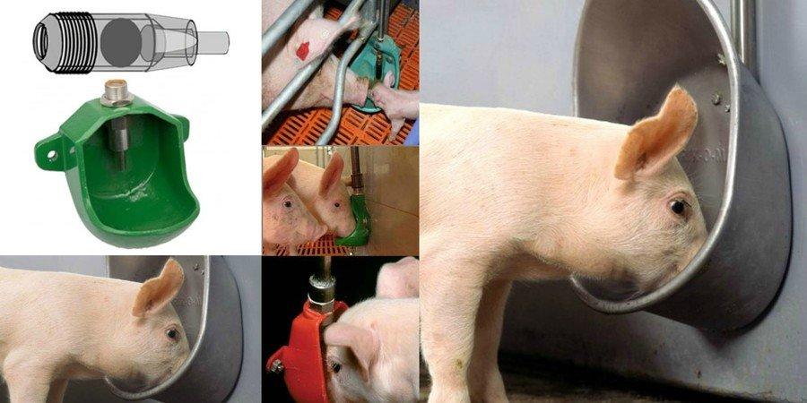Кормушки для свиней своими руками – варианты изготовления