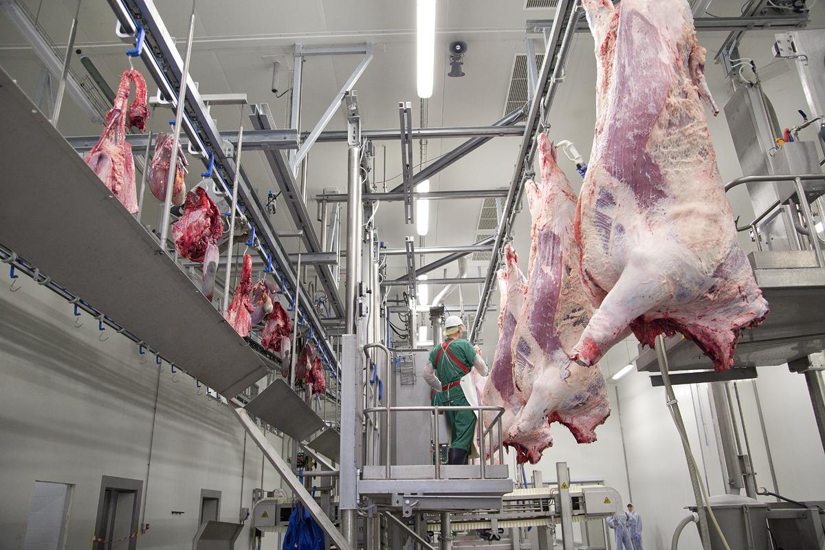 Забой коровы: технология убоя в домашних условиях, на мясокомбинатах, схема разделки туши