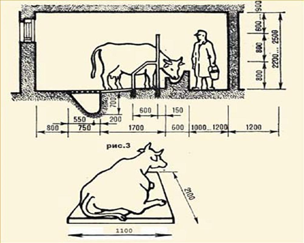 ✅ сараи для животных. сараи для животных и птицы – постройка своими руками — разбираемся развернуто