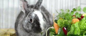 Можно ли кроликам давать огурцы, огуречную ботву