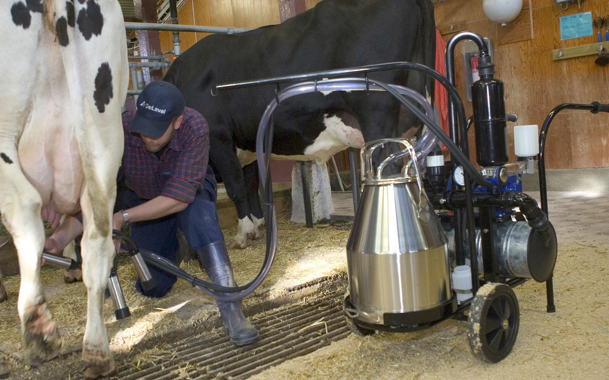 Доильный аппарат для коров (29 фото): как использовать оборудование для дойки коров в домашних условиях? какое устройство для доения лучше выбрать?