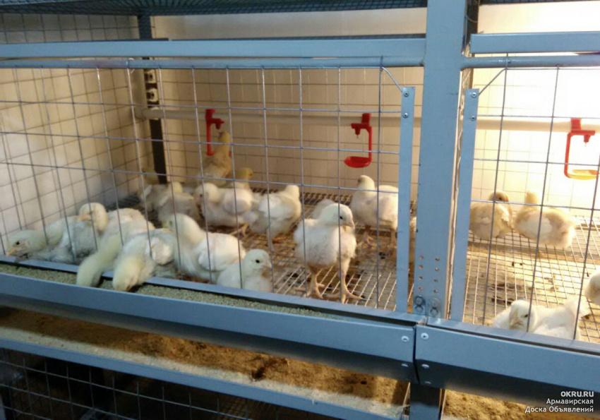 Лотковая кормушка для птицы (цыплят) своими руками | своими руками - как сделать самому - строитель