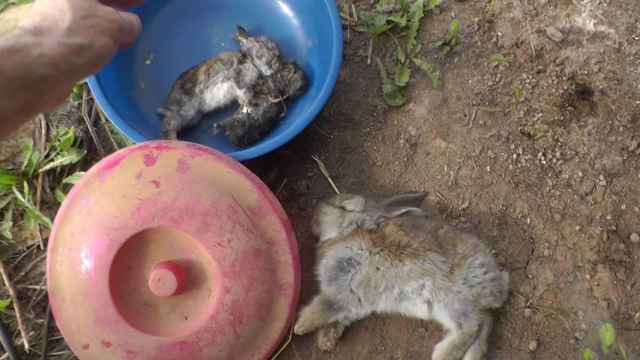 Почему могут дохнуть крольчата?  | фермер дохнут крольчата — что за беда за этим стоит? | фермер