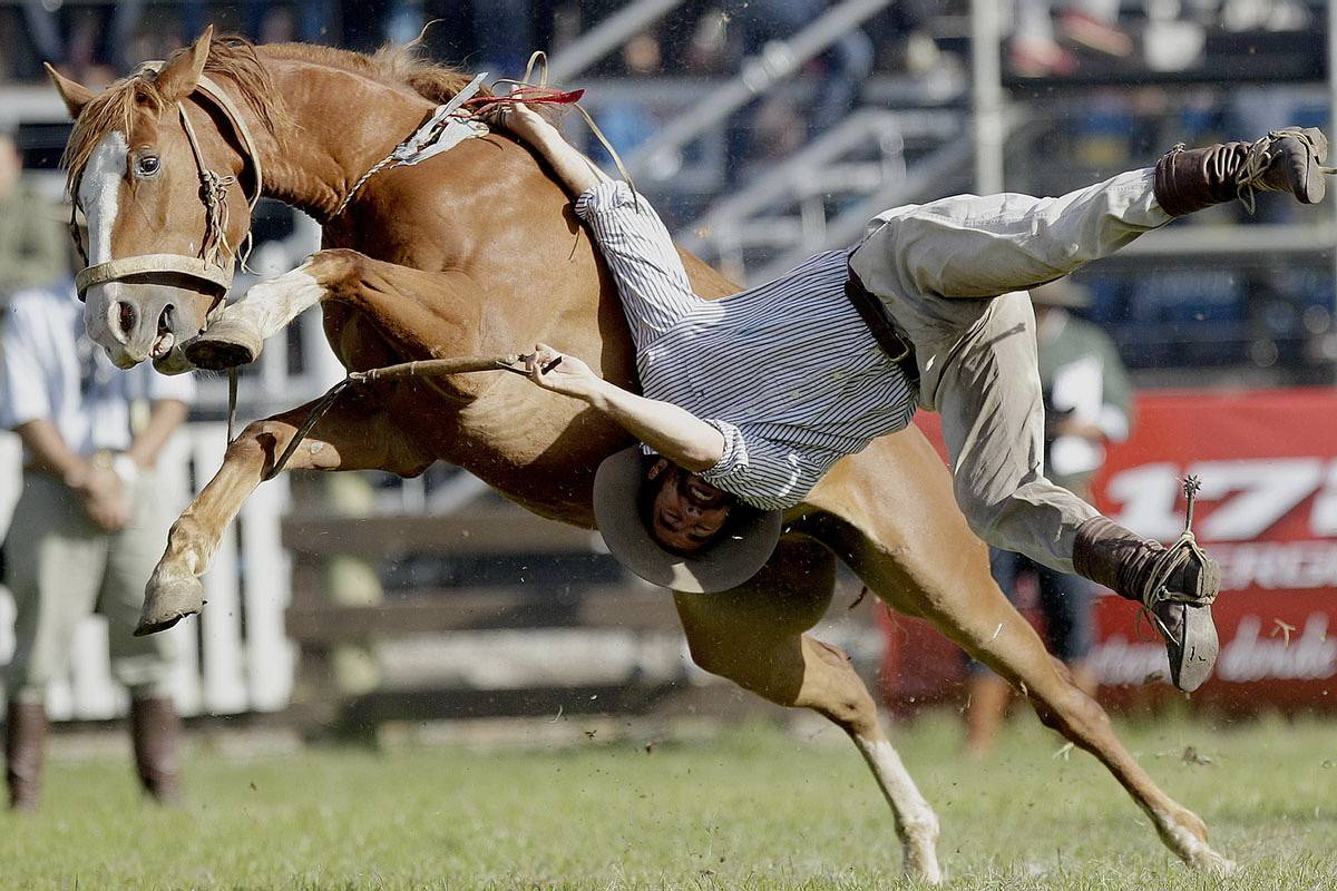 Почему лошадь кусается и как её отучить