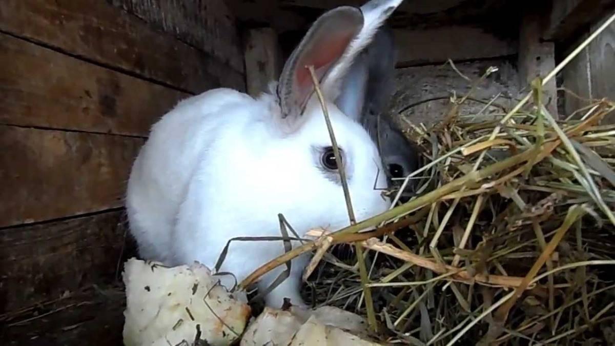 Можно ли кроликам давать овощи: тыква, картофель, кабачки