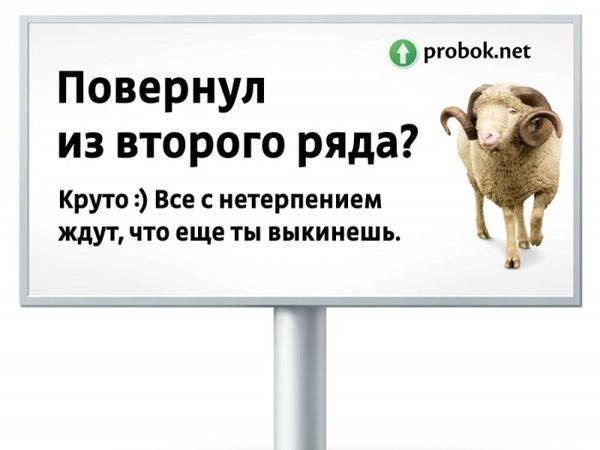✅ бараны: виды, чем кормить в домашних условиях, как содержать, как стричь - tehnomir32.ru