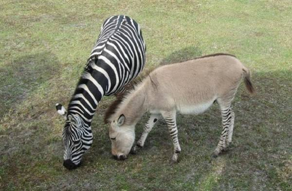 Разведение лошадей: особенности спаривания и селекции