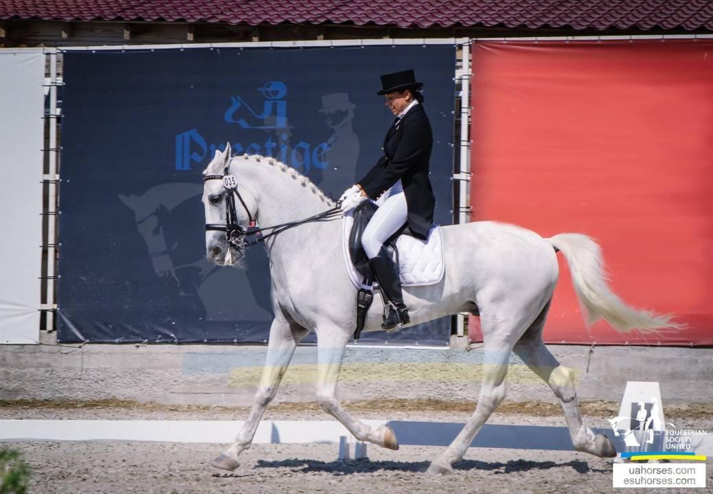 Как ездить верхом на лошади, управлять, какие есть команды