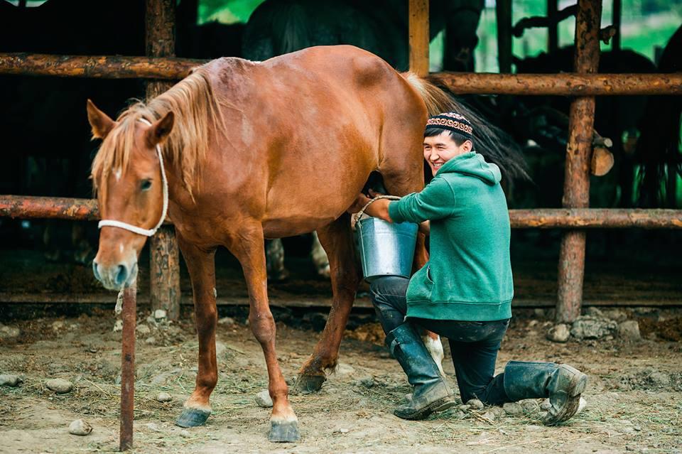 ᐉ есть ли у лошади вымя, конское молоко название - zoo-mamontenok.ru