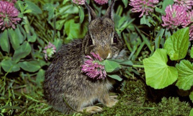 Можно ли давать кроликам зелень горчицы?