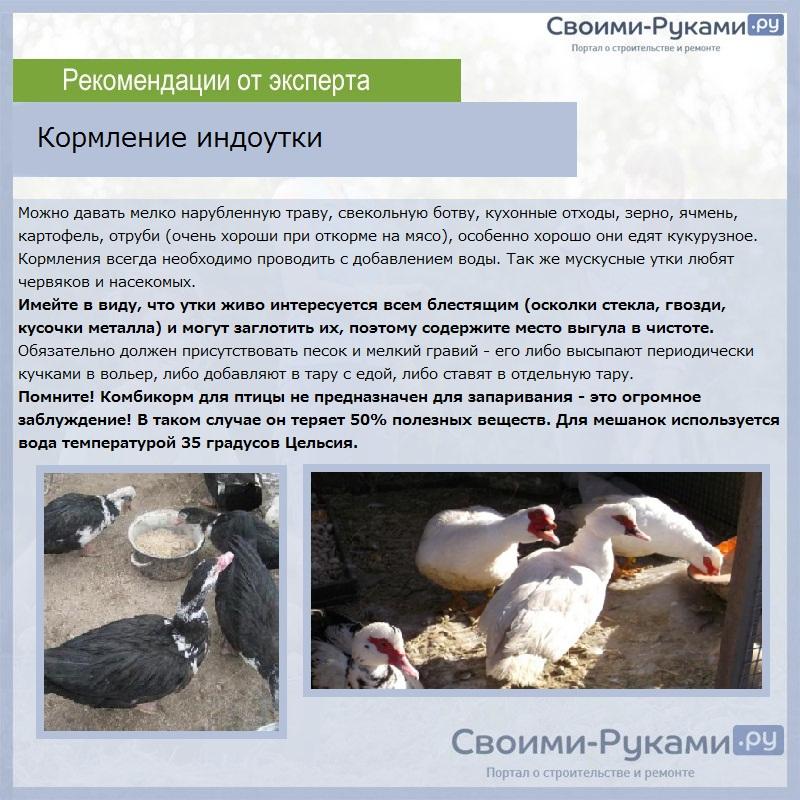 Корм для домашних птиц: особенности питания кур, уток, гусей и перепелов