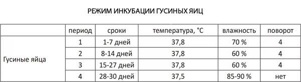 Инкубация утиных яиц: режим в домашних условиях, таблица, температура
