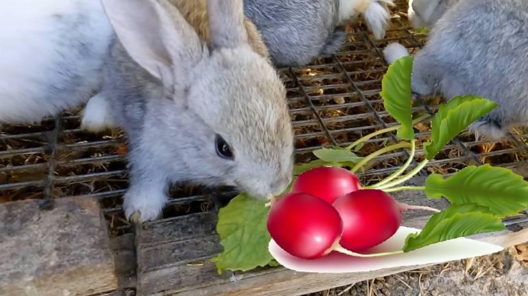 Можно ли давать морковную ботву и морковь кроликам: как и в каких количествах - гид по огороду