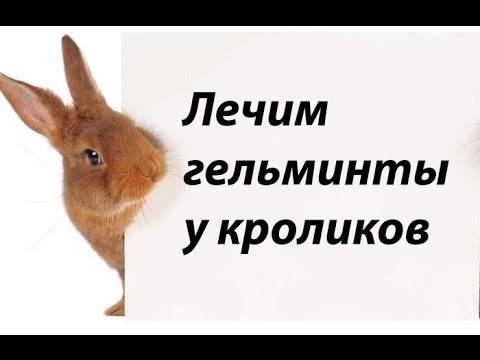 Глисты у кроликов, чем и как лечить, профилактика глистов