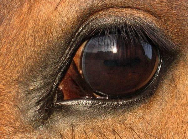 Зрение лошади: как она видит мир и почему нам важно это понимать?