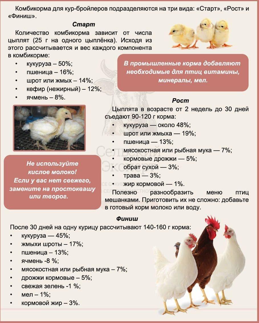 Разбираем рацион цыплят несушек от а до я