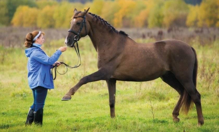 Сколько стоит содержание собственной лошади