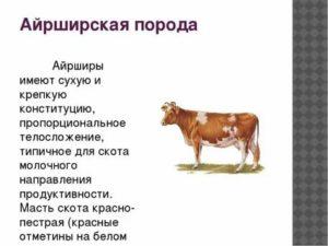 О красной степной породе коров: описание и характеристики, содержание, уход