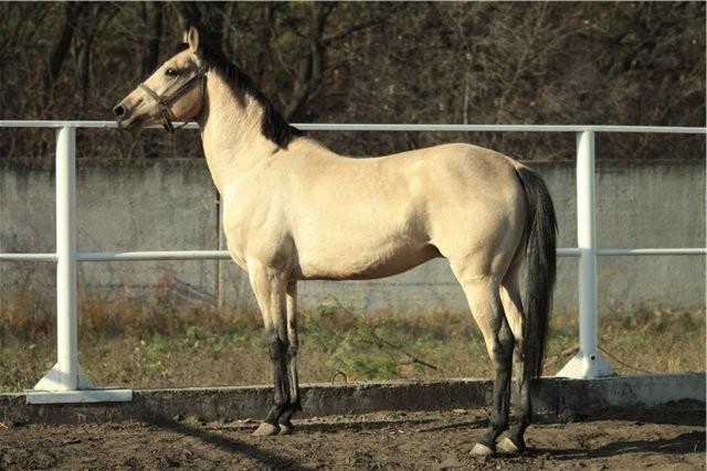 Какими бывают масти лошадей: основные и смешанные масти, классификация