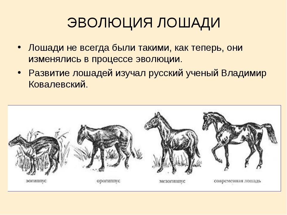 Роль и место лошади историческом развитии человека. курсовая работа (п). неопределено. 2007-11-19
