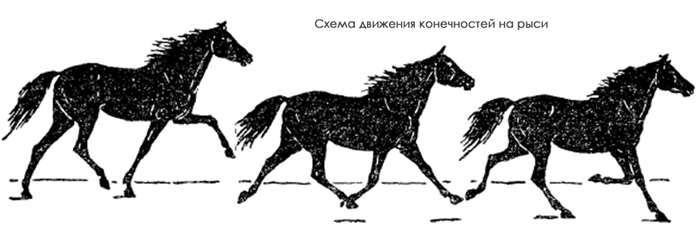 Аллюры лошадей: виды и характеристика, какой бег самый быстрый - сад и дача
