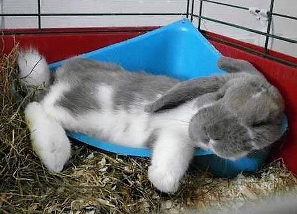 Почему кролик кусает крольчиху — кусаются ли зайцы?
