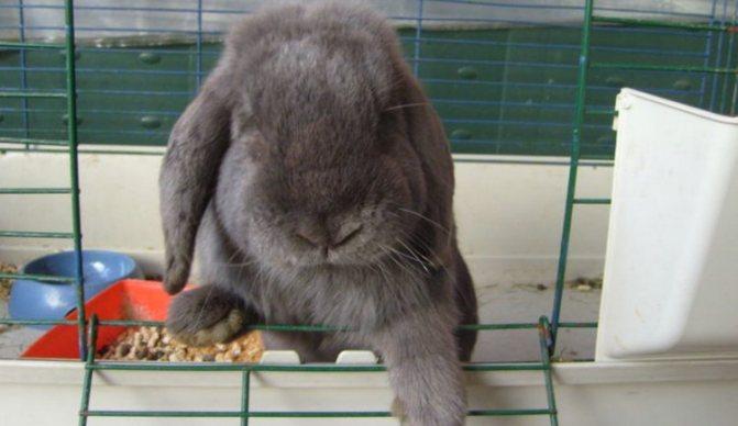 Кроличья ферма: бизнес-план по разведению кроликов с расчетами, смета на рентабельность кролиководства