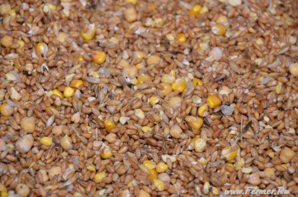 Проращивание пшеницы для кормления кур несушек зимой