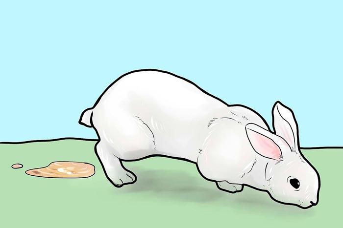 Понос у кролика как справится с этим недугом - про диарею (понос)