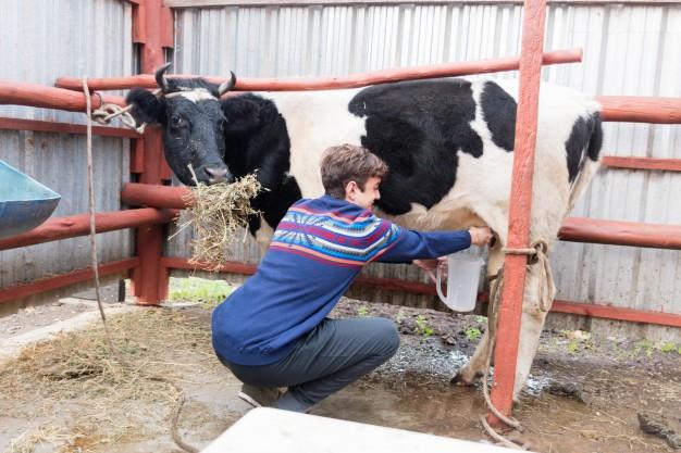Хвост коровы: назначение, заболевания, методы лечения