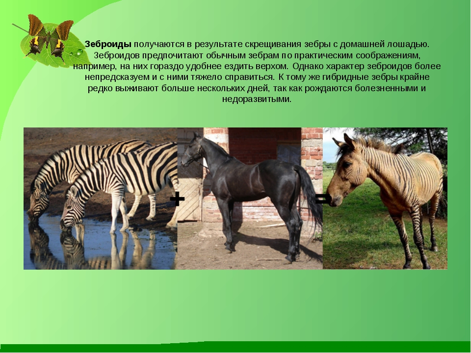 17 животных гибридов, которые, на самом деле, существуют :: инфониак