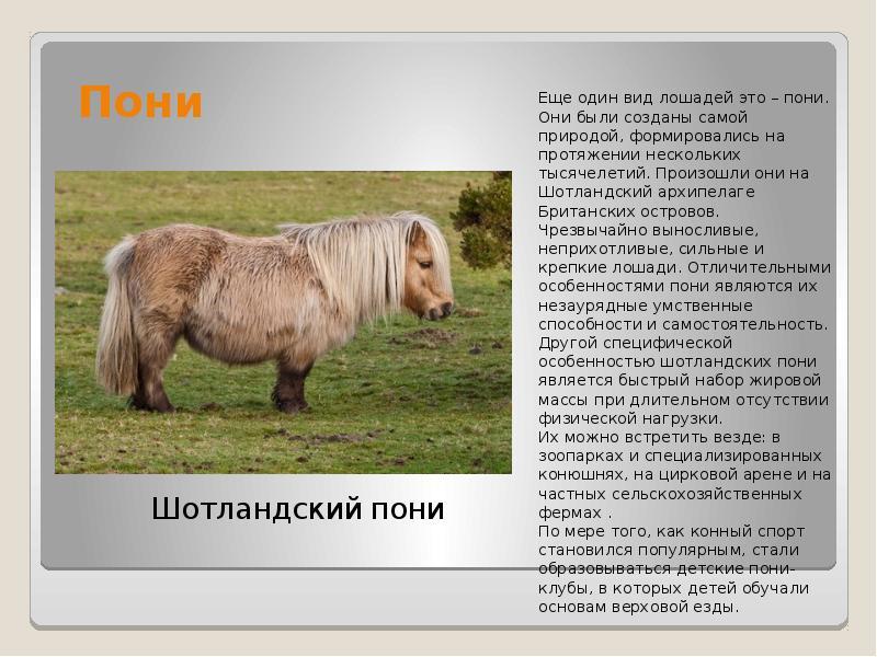 Значение лошади в жизни человека – описание, фото и видео  - «как и почему»