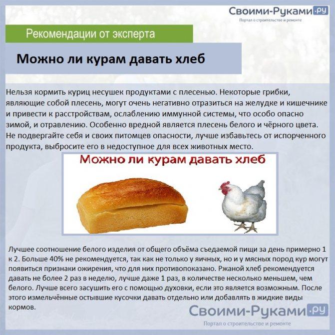 Как правильно кормить кроликов картофелем?