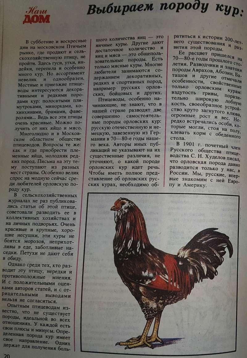 Описание внешних особенностей орловской породы кур