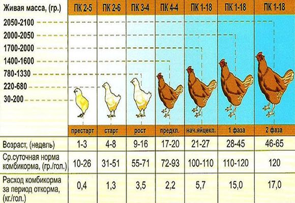 ᐉ до какого возраста несутся куры, сколько лет курица несет яйца? - zoomanji.ru