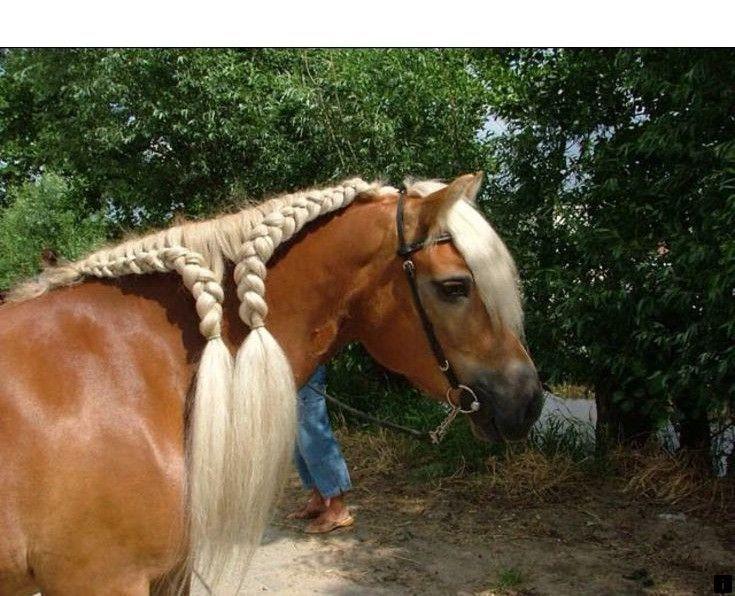 Грива у лошади: функции и правильный уход - atkorm.ru