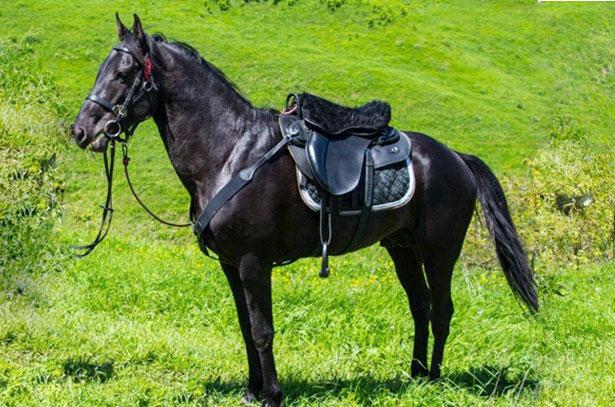 Кабардинская или черкесская порода — лошади кавказских гор