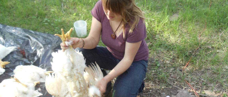Как правильно зарезать курицу и обработать тушку?