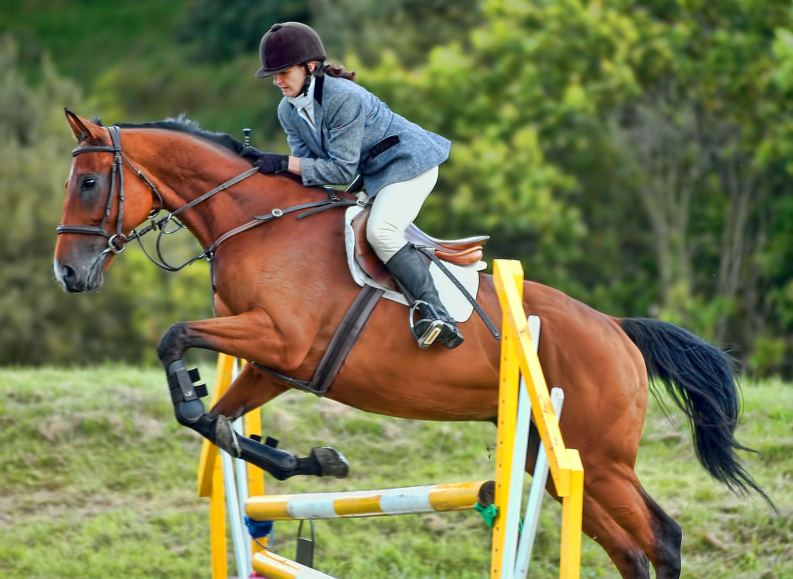 Скачки на лошадях - скорости, породы лошадей, травмы и содержание спортсменов