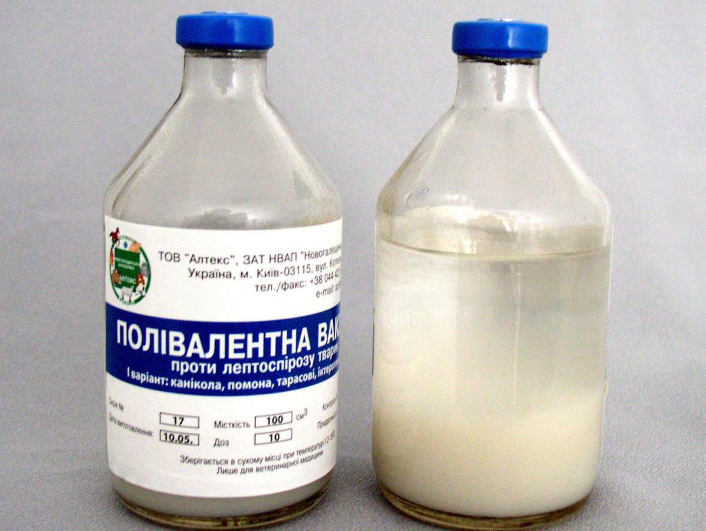 Горькое молоко у коровы: обзор возможных причин