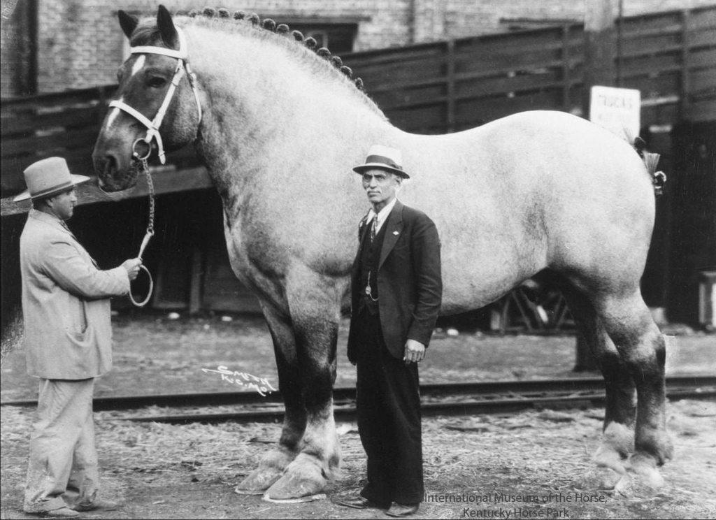 Сколько должна весить лошадь
