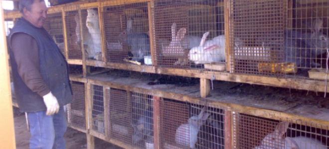 Можно ли содержать вместе кур и кроликов? возможные трудности совместного содержания и способы их устранения